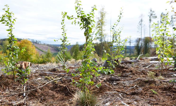 bessergrün Pflanzaktion in Gummersbach